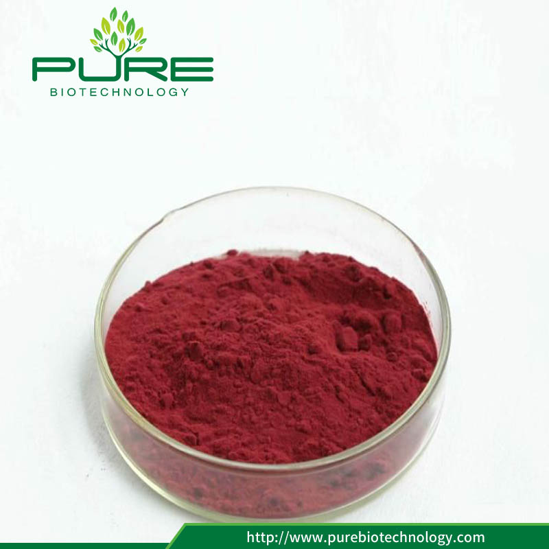 No Irradiation 10:1 cranberry extract with low price